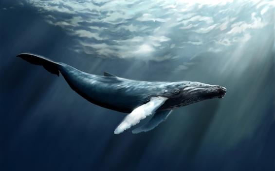 5039046-whale-wallpaper